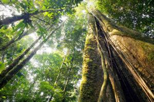 rainforest content
